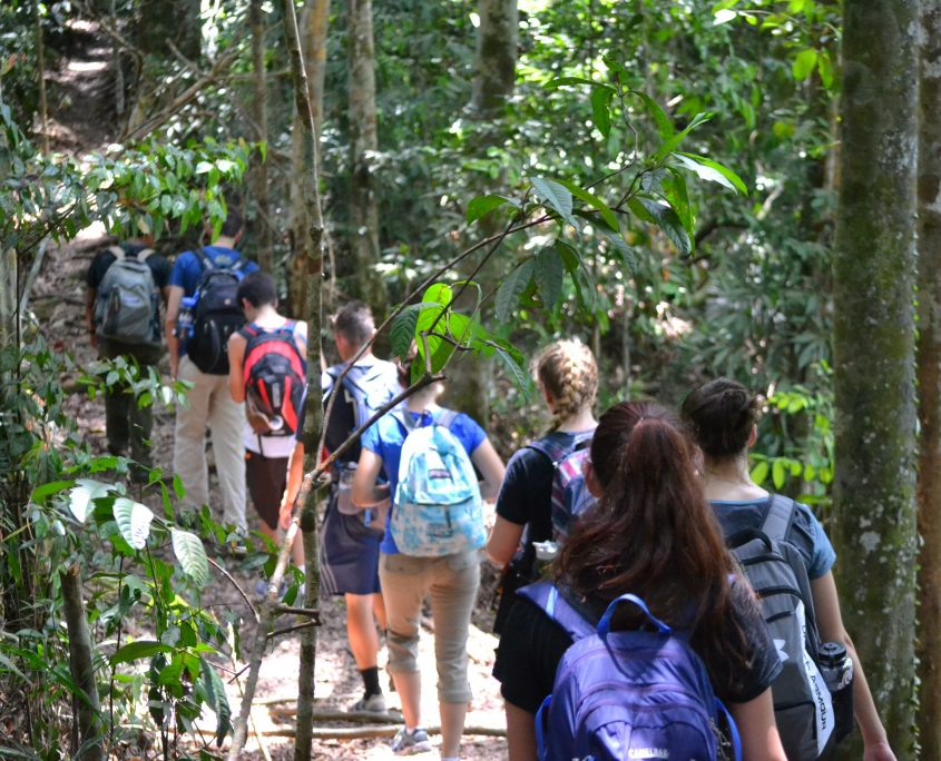 Hiking through the Sumatran Rainforest