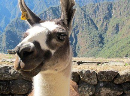 Smiling Residents of Machu Picchu